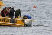Científicos australianos examinan al ballenato en Pittwater, 40 km al norte de Sidney. (Foto: Daniel Muñoz)