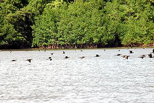 El paraje del parque de Majagual era un paraíso medioambiental lleno de enormes y frondosos manglares. (Foto: LEANDRO VELASCO)