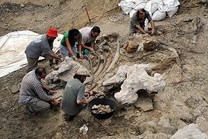 Imagen de los restos óseos hallados en el yacimiento cercano a Cinctorres.