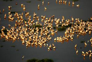 Pelícanos en Garamba. (Foto: Nuria Ortega)