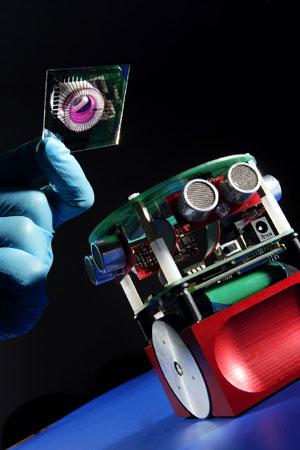 El prototipo del robot impulsado por neuronas de rata. (Foto: AFP)
