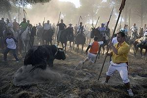 Un hombre se alista para atacar a un toro en las actividades de 'El toro de la Vega' en Tordesillas (Valladolid), el pasado martes. (Foto: AFP)