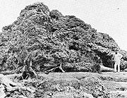 Roca desplazada por el tsunami que produjo la explosión del volcán Krakatoa en 1883. (Foto: SGA)