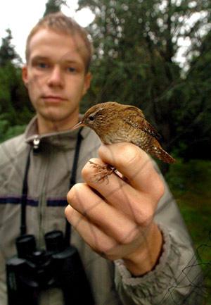 Un pájaro es examinado por Tamas Nemeth de la Sociedad de Ornitología húngara en el día europeo de la observación de aves, en el Jardín Botánico de la Universidad de Debrecen, a 245km al Este de Budapest, Hungría. (Foto: EFE / Tibor Olah)