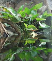 Vegetación amazónica. (Foto: CosmoCaixa)