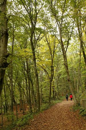 Un bosque en Estambul. (Foto: EFE)