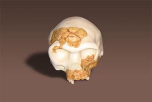 Reconstrucción en tres dimensiones del cráneo de 'Homo antecessor'. (Foto: IPHES)