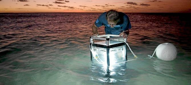 Un investigador busca especies nuevas con un acuario iluminado sobre el arrecife de coral de Lizard Island, en el extremo norte del estado australiano de Queensland. / REUTERS / GARY CRANITCH