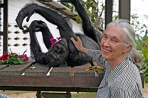 Jane Goodall junto al chimpancé 'Gregoire' en el zoo de Brazzaville. (Foto: Instituto Jane Goodall/EFE)