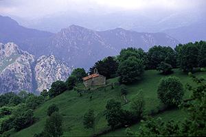 El tejo de Bermiego, galardonado como Árbol Longevo, destaca en color negro a la derecha del edificio. (Foto: Bosques sin Fronteras)