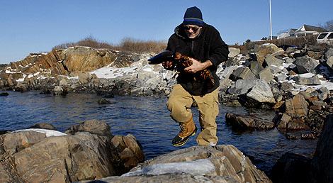 El famoso bogavante, a punto de volver al mar. (Foto: Reuters)
