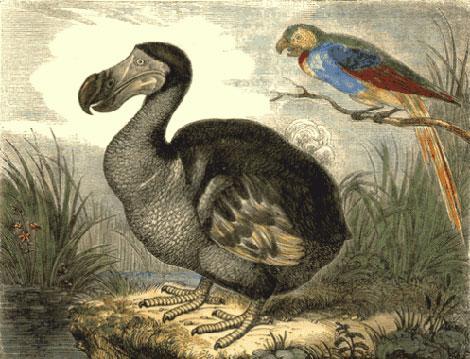 Dibujo de época de un dodo de Mauricio, a la izquierda.