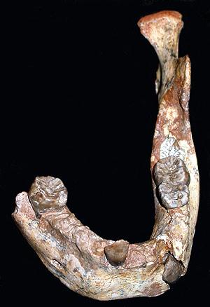 Mandíbula fosilizada de 160.000 años hallada en Marruecos en 2007. (Foto: 'PNAS')