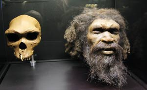 Reconstrucción de la cabeza de 'Homo rhodesiensis' que se exhibe en el Museo del Hombre en París. (Foto: AFP)