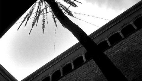 Vista de la palmera. (Foto: EL MUNDO)