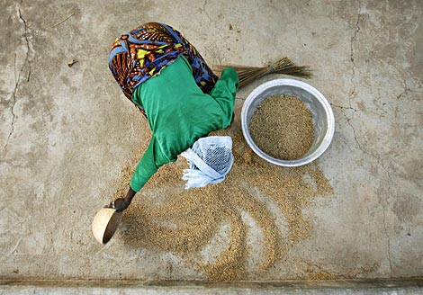 Una mujer recoge grano caído en el suelo en Ghana. (Foto: Reuters)