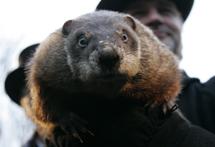 La marmota Phil. | REUTERS