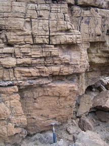 Estrato en el que hallaron las evidencias del animal más antiguo. | Nature