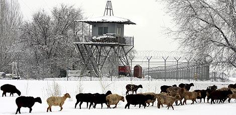 Un rebaño de ovejas pasa ante la base de Manás. | AP