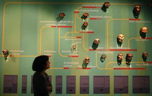 Panel sobre los homínidos de la exposición la Evolución de Darwin, en Lisboa. | REUTERS