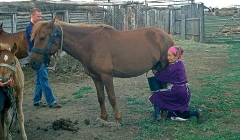 Una mujer kazaja ordeña uno de sus cabaños, como sus antepasados desde hace 5.500 años. / 'Science'