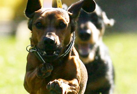 Dos perros paseando. | Efe