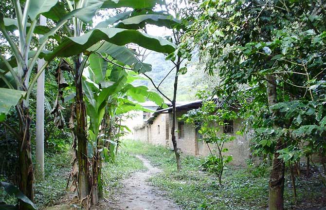 Camino por la selva alta peruana. (Foto: W. Fernández)