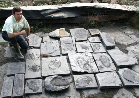 Algunos de los fósiles de trilobites hallados en Portugal. | Geoparque Arouca/CSIC
