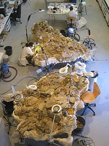Vista general de las dos carcasas con huesos fósiles en el laboratorio de paleontología de Dinópolis. | FCPT-Dinópolis