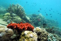 Varios tipos de coral en Honda Bay, Filipinas. | Afp
