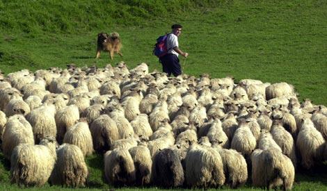 Pastor de ovejas en Gorbea, en Vizcaya. / Iñaki Andres