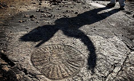La sombra de uno de los investigadores circunda uno de los fósiles del yacimiento. | Efe