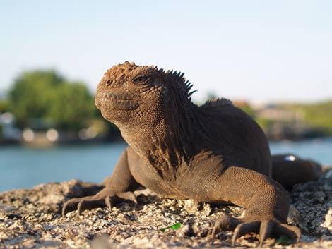 Una iguana marina. | Penelope Curtis