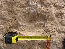 Huella fosilizada de camello. | Universidad de La Rioja