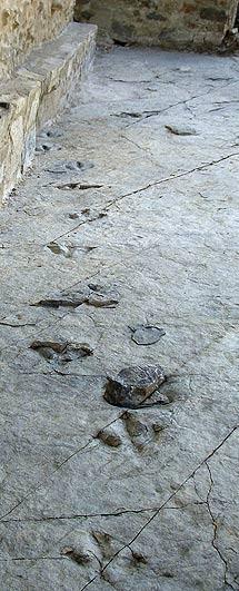Huellas de dinosaurio en Soria.