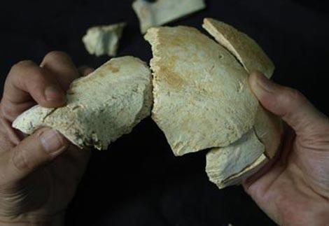 Cráneo 17, encontrado esta semana en la Sima de los Huesos. |Javier Trueba