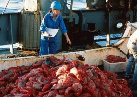 Pesca masiva de peces reloj anaranjados en los años 80. | Rudy Kloser / CSIRO