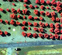 Imagen multiespectral de un olivar tomada en un vuelo de prueba. | CSIC