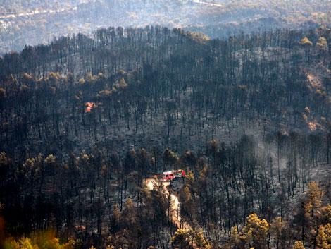 Bosque quemado por las llamas. | Efe