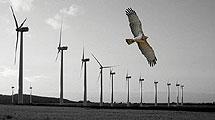 Turbinas cerca de Tarifa. | Luis Barrios