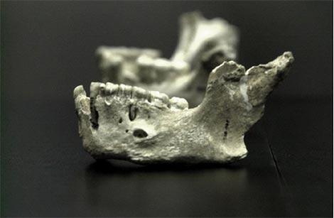 Mandíbula de neandertal de El Sidrón. |EFE