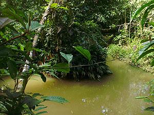 Imagen de selva en la región amazónica. (Fotos: W. Fernández)
