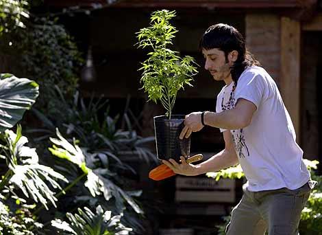 Un joven con una planta de marihuana en un patio de Buenos Aires. | Reuters