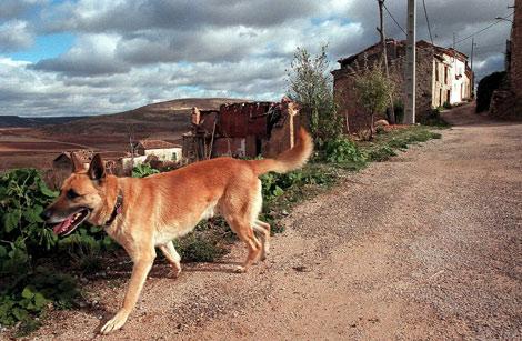 Un perro deambula por un pueblo casi abandonado de Guadalajara. | C. Barajas