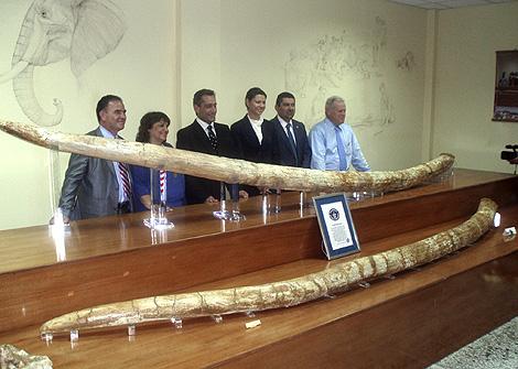 Autoridades locales y representantes del Libro Guinness posan con los colmillos. | Efe