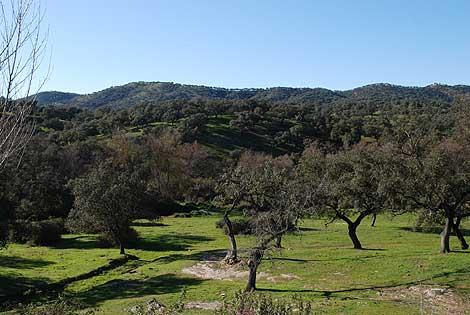 Bosque en Aracena, Huelva.   WWF