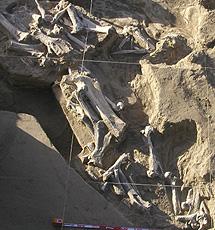 Asociación característica de fósiles.   IGME