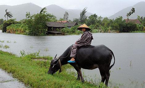 Un niño monta un búfalo junto a casas inundadas en la provincia de Quang Tri.   AFP