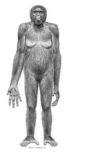 Probable apariencia del Ardipithecus ramidus. | J.H Matternes.