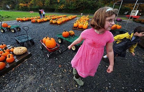 Niños transportan calabazas para celebrar Halloween en EEUU. | Afp